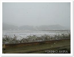 hatu-yuki
