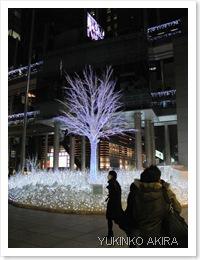 shiodome-tree2